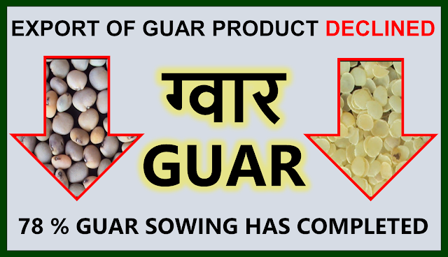 Export of guar products has declined by 5.5%, Guar, guar gum, guar price, guar gum price, guar demand, guar gum demand, guar seed production, guar seed stock, guar seed consumption, guar gum cultivation, guar gum cultivation in india, Guar gum farming, guar gum export from india , guar seed export, guar gum export, guar gum farming, guar gum cultivation consultancy, today guar price, today guar gum price, ग्वार, ग्वार गम, ग्वार मांग, ग्वार गम निर्यात 2018-2019, ग्वार गम निर्यात -2019, ग्वार उत्पादन, ग्वार कीमत, ग्वार गम मांग, Guar Gum, Guar seed, guar , guar gum, guar gum export from india, guar gum export to USA, guar demand USA, guar future price, guar future demand, guar production 2019, guar gum demand 2019, guar, guar gum, cluster beans, guar gum powder, guar gum price, guar gum uses, ncdex guar, guar price, guar gum price today, cyamopsis tetragonoloba, ncdex guar gum price, guar beans, guar rate today