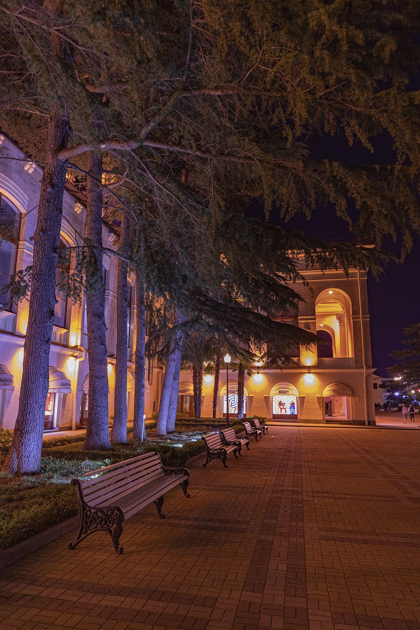 photo Igor Novik Christmas trees in Sochi center night night city