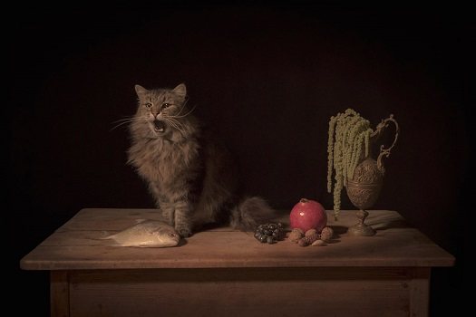 Photo by Tami Bahat - The Feline - 2017 - From the Dramatis Personae series | fotos surrealistas bellas, imagenes chidas de obras de arte contemporaneo en claroscuro