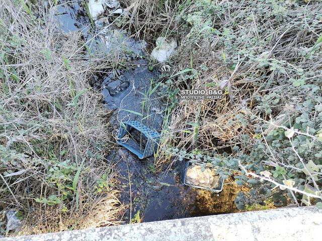 Αργολίδα: Φρικτές εικόνες με πτώμα σκύλου πεταμένο σε ρέμα