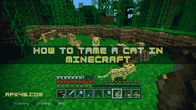 minecraft how to tame a cat, how do you tame a cat in minecraft, how to tame an ocelot, how to breed cats in minecraft, how to tame cat in minecraft, how do you feed a cat in minecraft, how to get a cat to follow you in minecraft,