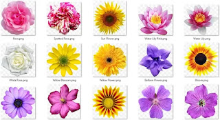 تحميل صور أزهار مختلفة الألوان بدقة عالية3