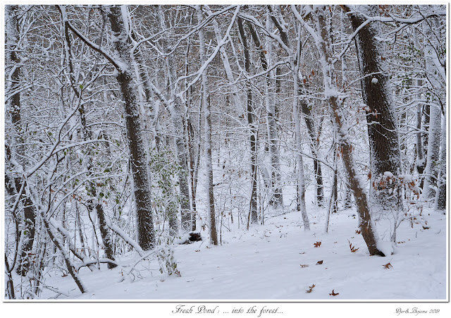 Fresh Pond: ... into the forest...