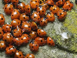 مخلص درس التنوع الحيوي - التنوع الحيوي والمحافظة عليه.
