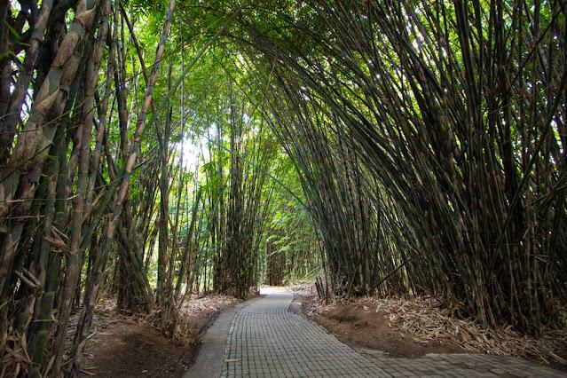 Foresta di bambù al villaggio tradizionale di Penglipuran-Bali