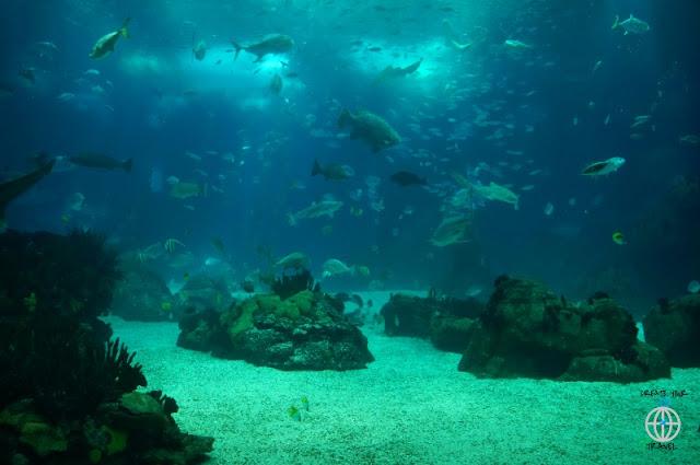 OCEANARIO DE LISBOA AKWARIUM