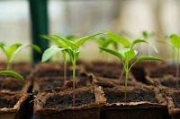 usaha bibit tanaman, bisnis bibit tanaman, modal usaha bibit tanaman, biaya modal usaha bibit tanaman, usaha buah-buahan, biaya modal usaha bibit tanaman dan buah-buahan