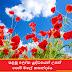 පළමු ලෝක යුද්ධයෙන් උපන් පොපි මලේ කතන්දරය 🌺🌺 (Poppy Flower)