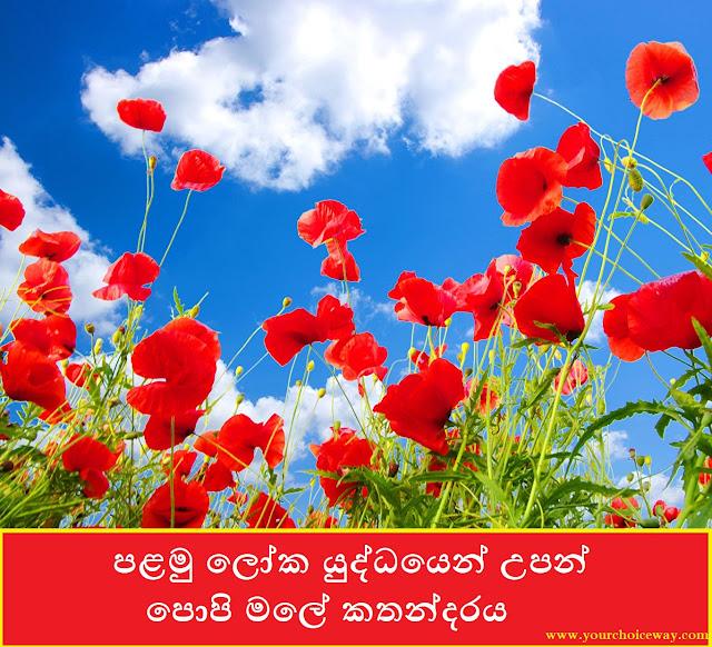 පළමු ලෝක යුද්ධයෙන් උපන් පොපි මලේ කතන්දරය 🌺🌺 (Poppy Flower) - Your Choice Way