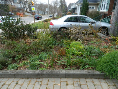 Toronto Bedford Park Fall Front Yard Cleanup Before by Paul Jung Gardening Services Inc.--a Toronto Gardening Company