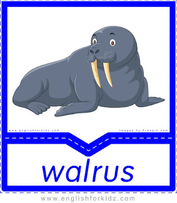 Walrus - printable Arctic animals flashcards for English learners