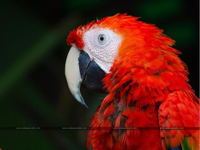 Bird Images   Bird Wallpaper HD Free Download