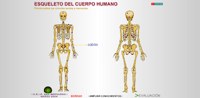 http://www.eltanquematematico.es/CM6/cuerpo/esqcuerpo.html
