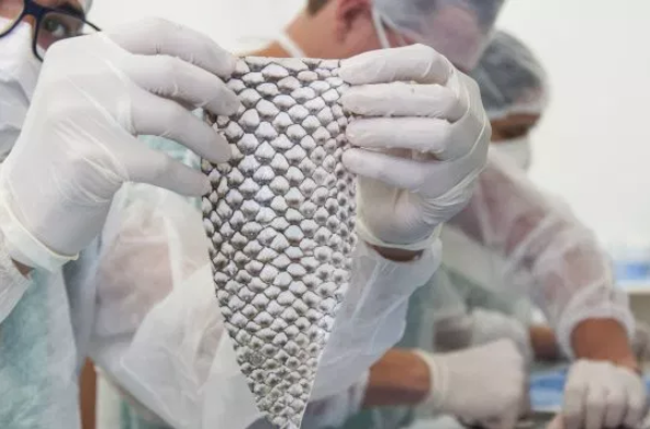Trans woman, 35, gets vagina made out of fish skin