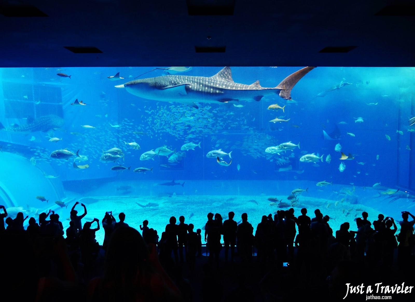 沖繩-景點-推薦-美麗海水族館-海洋博公園-自由行-旅遊-Okinawa-attraction-Ocean-Expo-Park-Toruist-destination