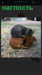 На земле лежит свернувшись в клубок собака и сверху в наглость устроилась кошка