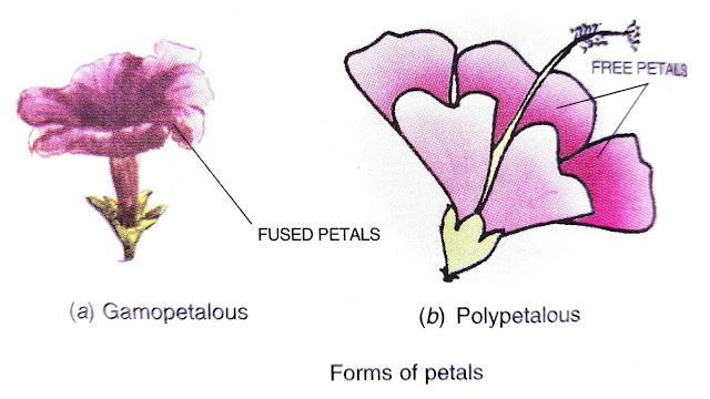 four main parts of flower