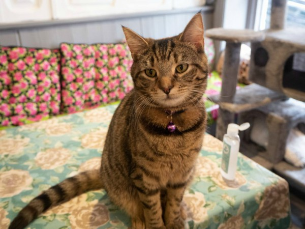 best cat cafe uk