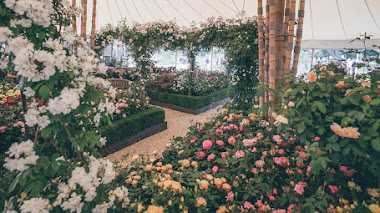 Siete rosas inglesas en Hampton Court Garden Festival