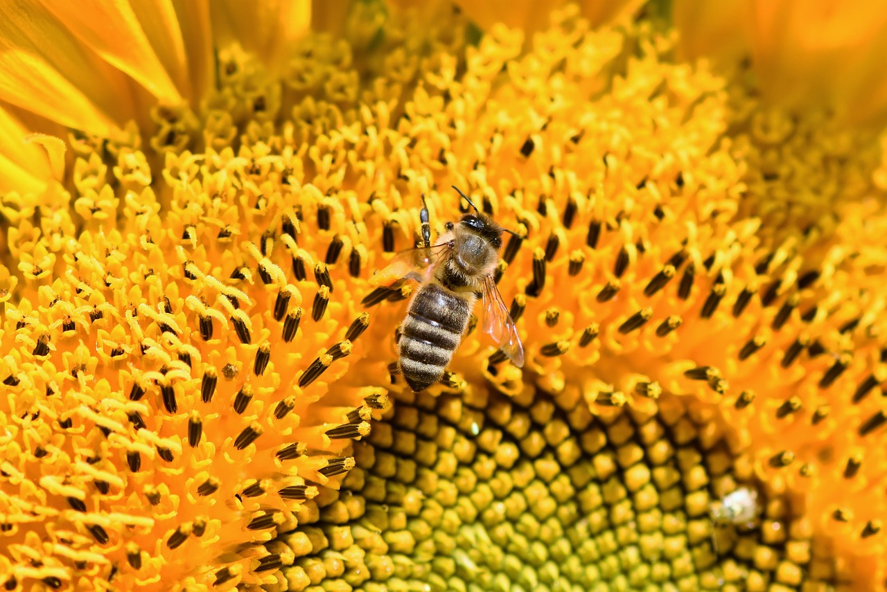 Ternak Lebah Klanceng