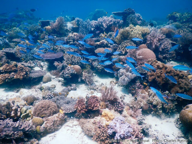 coral reef and tropical fish of mioskon island