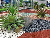 Jenis,Harga Dan Manfaat Batu Koral Sikat