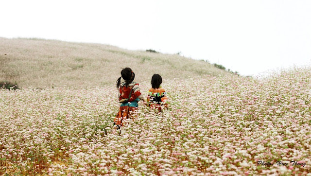The experience of traveling to Ha Giang in the Buckwheat flower season 1
