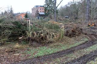 Bischleben Baumfällungen Hochwasserschutz Mühle