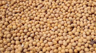 Soyabean, sarson, soybean oil and CPO fundamental update