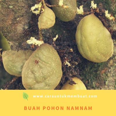 Buah Pohon Namnam