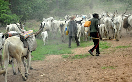 We Are Tired Of Open Grazing — Miyetti Allah
