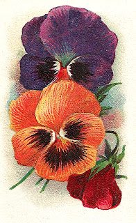 flower pansy artwork trade card printable clipart download