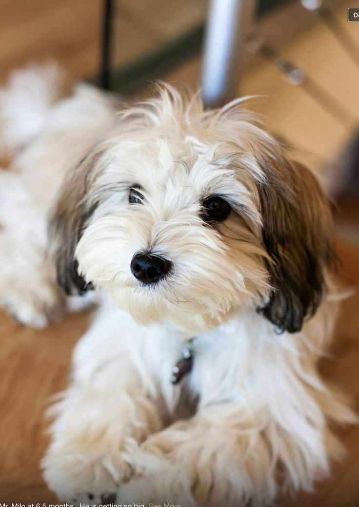 Top 5 Best Dog Breeds For Small Apartment