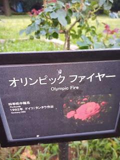 バラ(オリンピック ファイヤー)