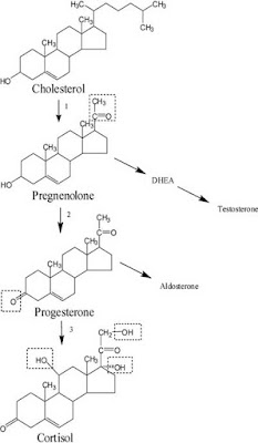 Biosynthesis of cortisol