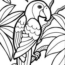 Wild Parrot In Jungle Animals Coloring Sheet Download