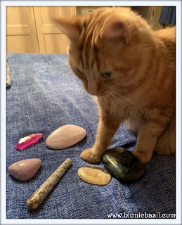 Fudge's Crystal Healing  @BionicBasil® The Pet Parade 321