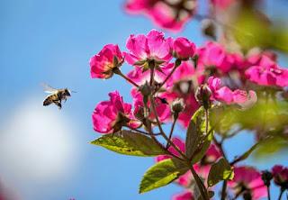 manfaat madu asli sebuah artikel kesehatan populer ilmiah