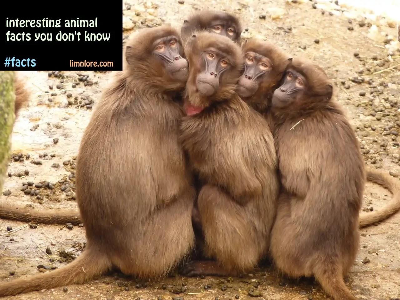 animal-facts