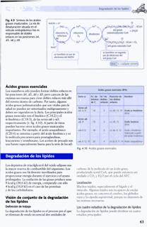 Libros Medicina Curso Crash Esencial Metabolismo Nutrición