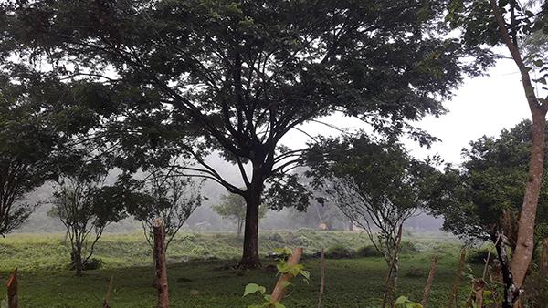 green foggy scenery