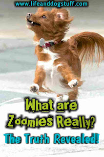 What are Zoomies Really.