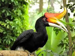 Status perlindungan Burung Rangkong