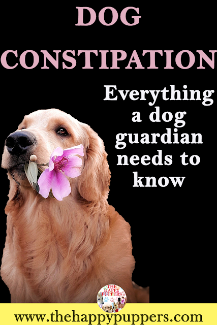 The complete guide to understanding constipation in dogs