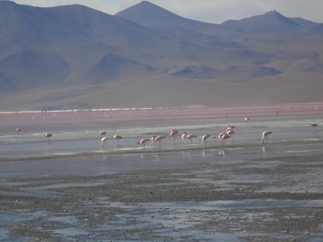 Salar de Uyuni - Tour por el sur de Bolivia desde San Pedro de ... 4eb1b7e7b3bb2