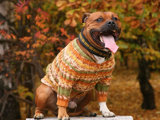 Sewing clothes for pets