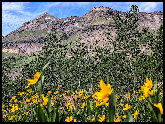 Wild Flower Field in front of the Twin Peak Mountains - Utah