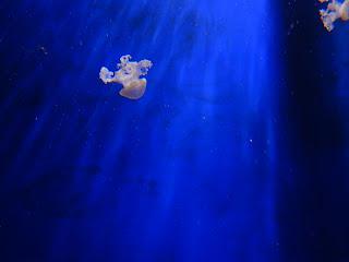 ジェノヴァ水族館のクラゲ