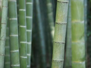 cara-mengeringkan-bambu.jpg