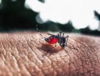 Vektor Demam Berdarah Dengue (DBD)
